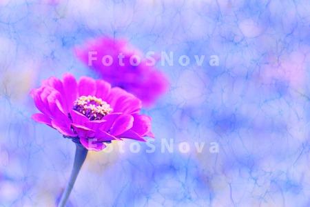 цветочный,_цветы