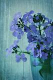 цветок;_старинны