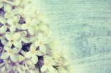 Сирень,_цветок,_с