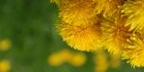 цветок,_цветы,_жё