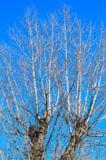 деревья,_небо,_ве