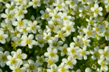 растение,_флора,_