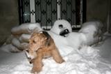 Собака,_блокпост