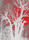 Tree,_silhouette,_nature,_glas