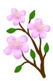 цветы,_цветок,_цв