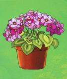 цветы,_фи