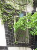 дерево,_растение