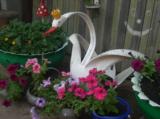 лебедь,_цветы,_ст