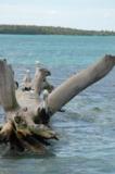 карибское,_море,_