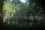 вода._деревья,_ли