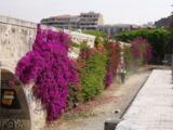 мост,_цветы,_фиол