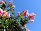 цветки,_цветы,_ро