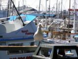Чайка,_катер,_лод
