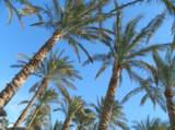 пальмы,_небо,_отд