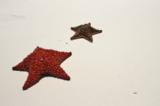 Звезда,_морская,_