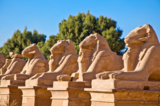 Египет_Сфинксы_д