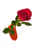 роза,_ваз