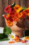 настурция,_цветы