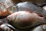 рыба,_улов,_рыбак