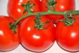 помидор,_томат,_т