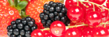 background_berry_black_blackbe
