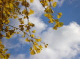 небо,_дерево,_лис