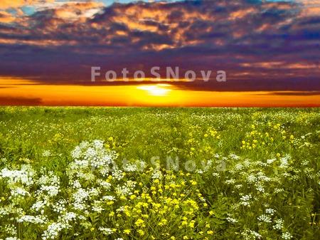 поле,_пейзаж,_при