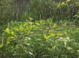 летний_дождь,_ка�