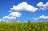 природа,_пейзаж,_