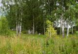 лес_роща_деревья