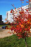 дома,_дерево,_маш