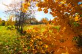 клён,_листья,_дом