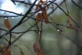 осень_дождь_капл
