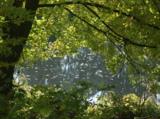пейзаж,_река,_осе