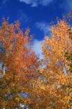 Деревья,_листья,_