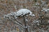Осень,_снег,_перв