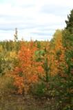 Листья,_деревья,_