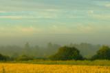 утро,_туман,_поле