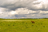 поле,_небо,_облак