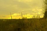 трава,_сухой,_сол