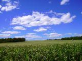 поле,_гре