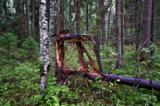 дерево_,_осень,_п�