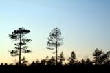 природа_пейзаж_д