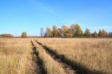 природа_лес_роща