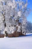 novgorod_city_tree_winter_fros