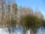 зима_февраль_сне