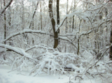 зима_январь_лес_�