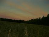 лето_август_поле