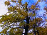 осень_октябрь_ду