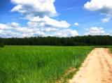 лето_поле_дорога